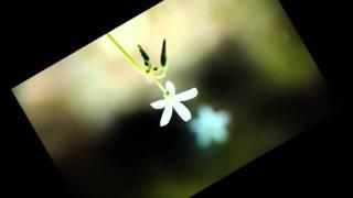 Sign(オルゴール)の動画