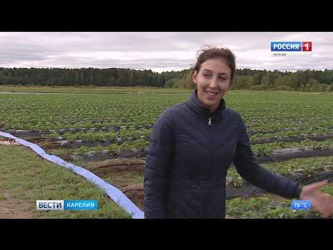 Фермерское хозяйство семьи Сосункевич из Прионежья