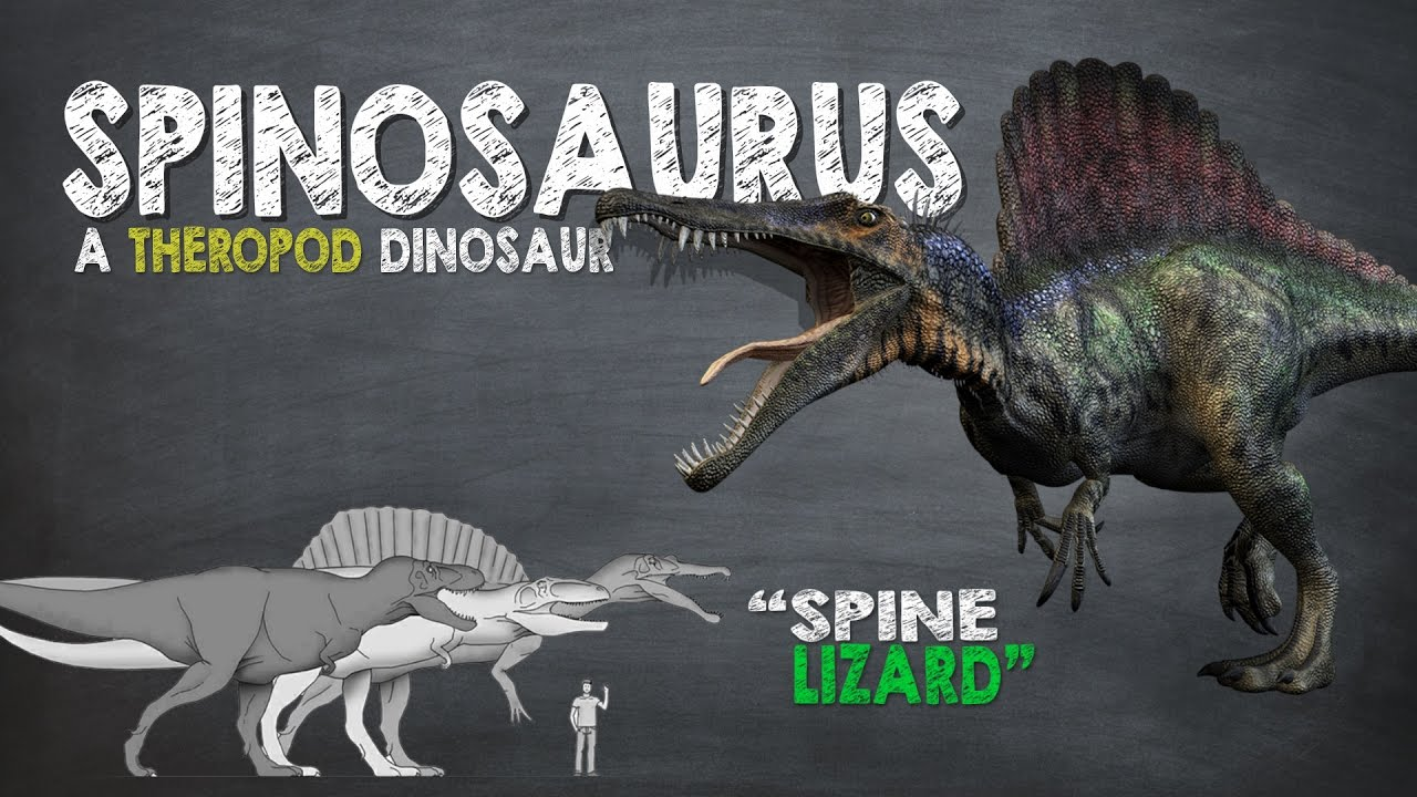Spinosaurus Facts! A Dinosaur Facts Video About