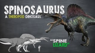 Spinosaurus Facts! A Dinosaur Facts video about Spinosaurus, the largest known carnivorous dinosaur