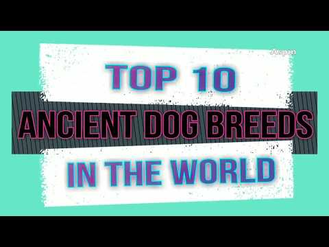 Top 10  ANCIENT DOG BREEDS IN THE WORLD