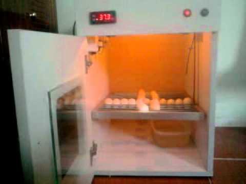 máy ấp trứng 0972184189 .mp4