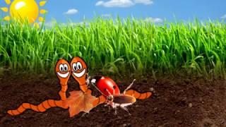 Роль червей в образовании почвы|Видео и мультики для детей и взрослых