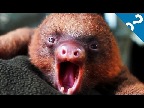 4 Worst Evolutionary Adaptations in the Animal Kingdom | What the Stuff?!