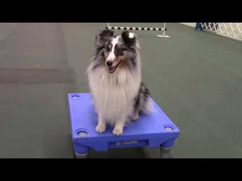 Pet Tricks Class