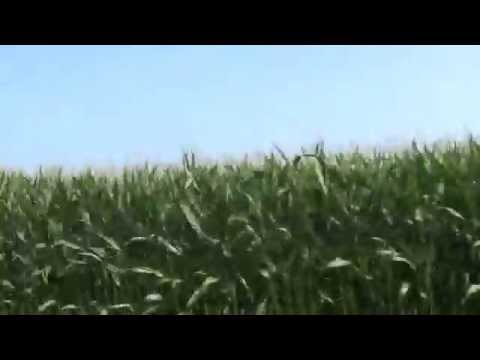 Farm Fields In Calhoun County