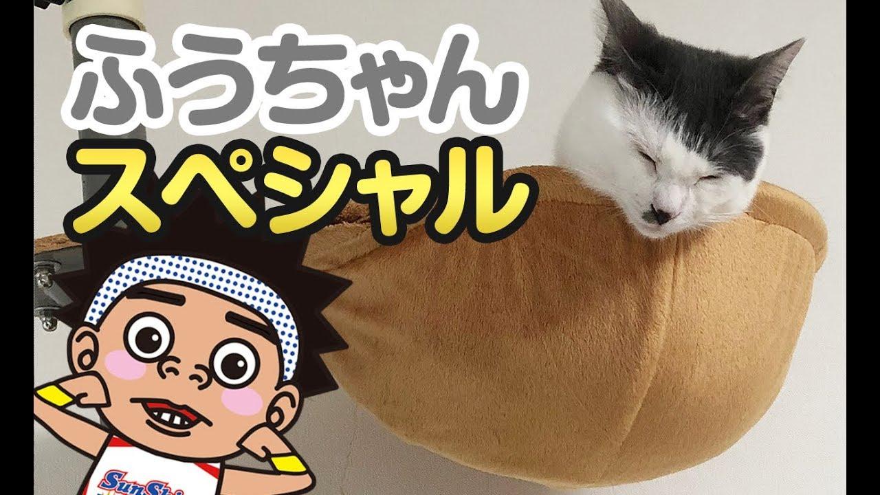 サンシャイン 池崎 猫