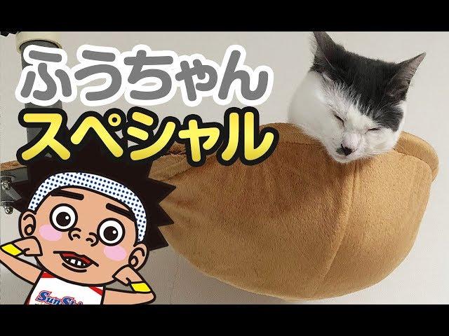 【サンシャイン池崎猫】ふうちゃんSP!ふうらい絵巻~其の七~
