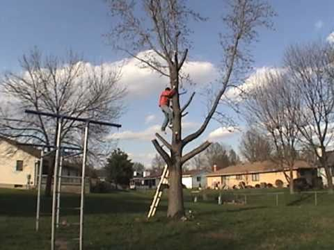 DIY Tree Removal   How To Cut Down A Tree