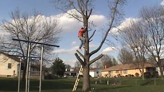Video DIY Tree Removal - How to Cut Down a Tree download MP3, 3GP, MP4, WEBM, AVI, FLV November 2017