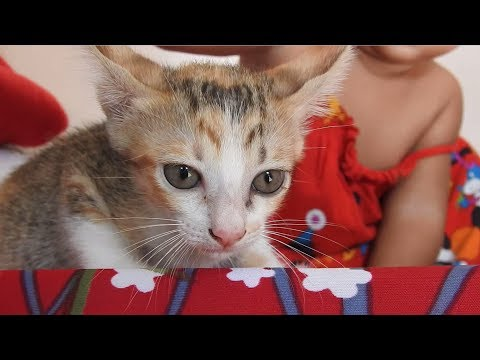Kid Play with Kittens Meowing and Feeding Cats