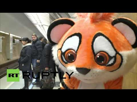 """Russia: """"Tiger"""" prowls the Moscow underground as part of gov initiative"""