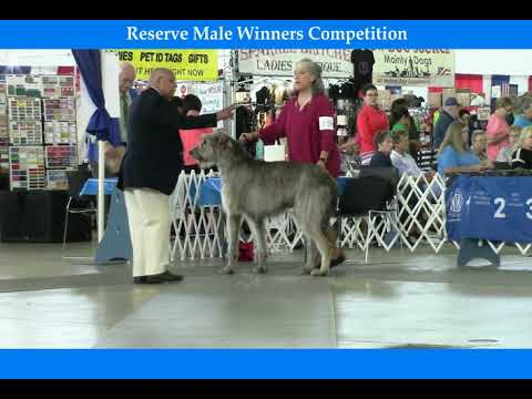 07-07-2018 Greater Collin Kennel Club - Irish Wolfhounds