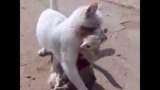 Бродячие псы загрызли котёнка. Кошка пытается спасти