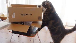 自分にぴったりサイズの箱を選ぶねこ。-Maru chooses the box which fits him perfectly.-