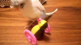 「鳥くさい〜」おもちゃと共に.