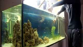 мой аквариум ч.3 уход за аквариумом.