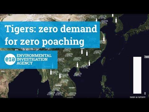 Tigers - Zero Demand for Zero Poaching
