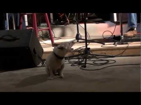 Shorty The singing dog part 2