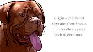 French Mastiff Video
