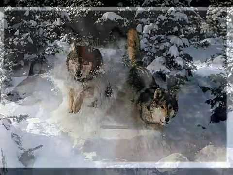 The Majesty of Wolves
