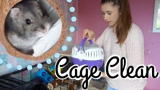 hamster cage clean evening pet jobs