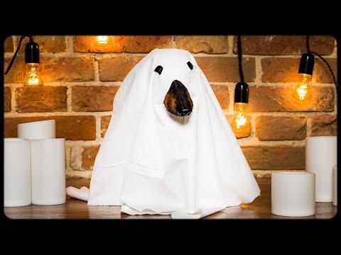 DOG Halloween PRANK! Funny animal video!