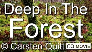 Deep In The Forest - CQ Film HD