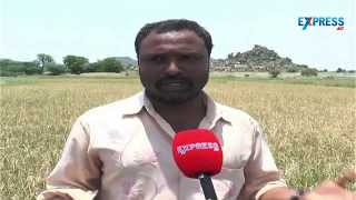 Unseasonal Rains destroying farmers fields in Mahabobnagar district
