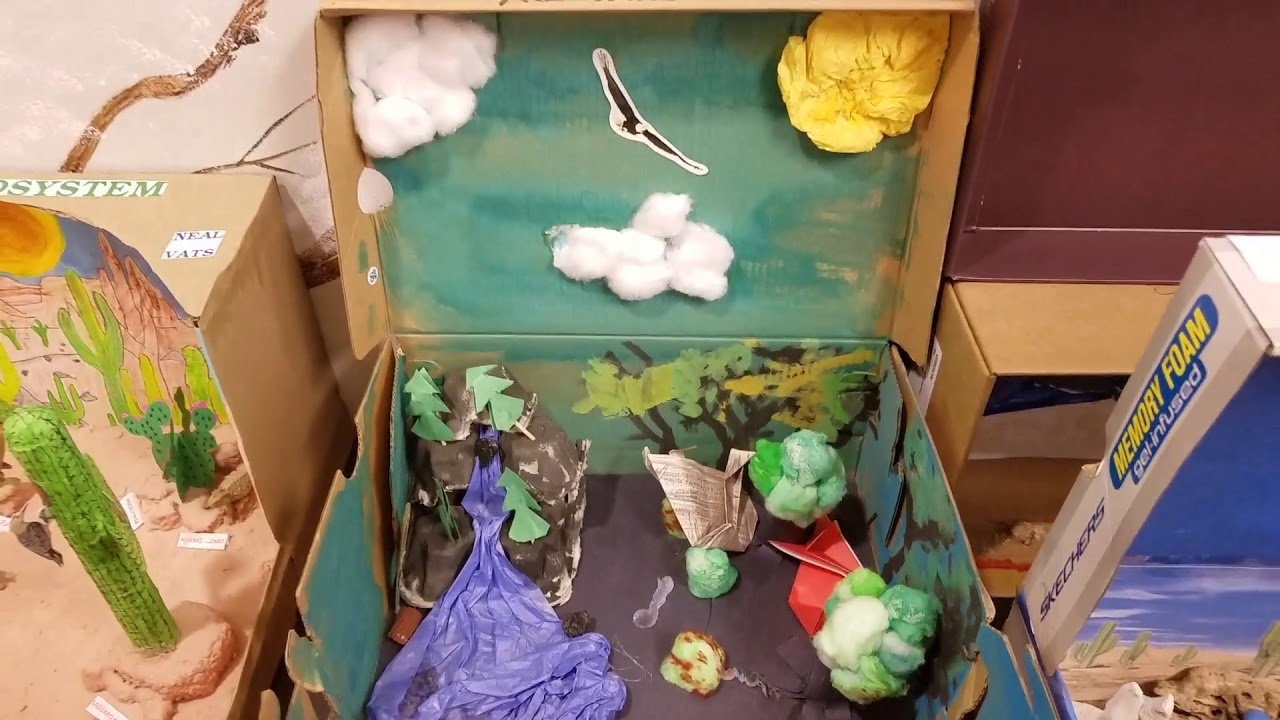 Fulton Science Academy 3rd Grade Ecosystem in a Shoebox Project