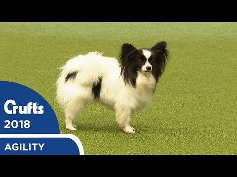 Agility - Kennel Club Novice Cup Final (Agility) Part 1 | Crufts 2018