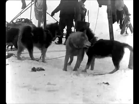 Roald Amundsens sydpolsferd