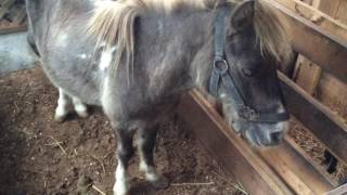 「大山乗馬センター」サカラート、リグヴェーダ、エクスペディション、