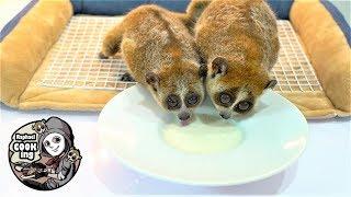 ピグミースローロリス特製スープ Special soup for Pygmy slow loris【ラファエルクッキング Raphael cooking】【4K】