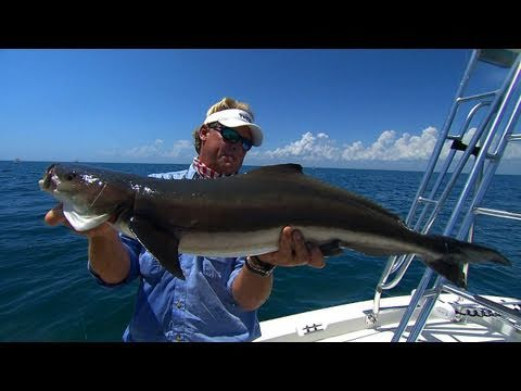 Cobia Fishing The Port Canaveral Beaches With Capt Scott Lum