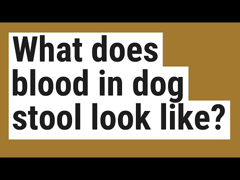 What Does Blood In Dog Stool Look Like?