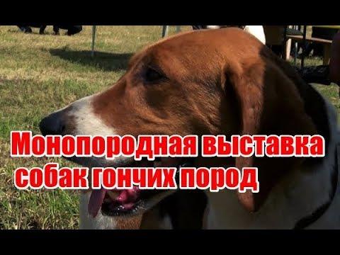 Монопородная выставка собак гончих пород