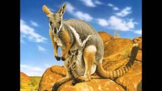 """Австралійська казка """"Як у кенгуру з'явилася на животі сумка"""""""