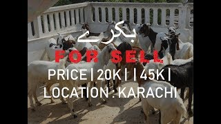 Goat For Sale In Karachi - Youtube Downloader Free - M4ufree com