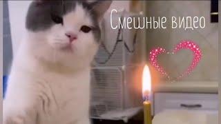 Приколы с животными и людьми Смешные видео