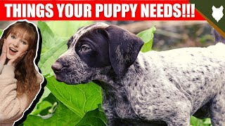 THINGS YOU'LL NEED FOR YOUR GERMAN SHORTHAIRED POINTER PUPPY
