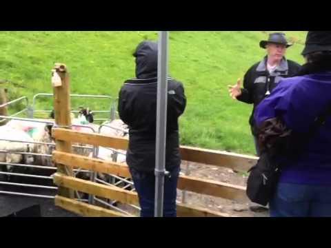 Joyce Country Sheepdogs demonstration