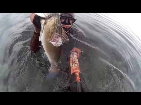 Spearfishing Croatia mini mix in shallow sea