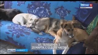 ГТРК «Кузбасс» призывает помочь приюту для животных «Верный»