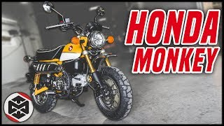 First Ride on the Honda Monkey 125!