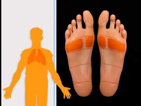 Проекция внутренних органов на стопе