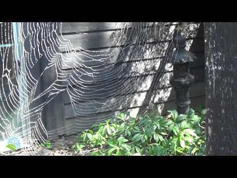 Web mutation??? 9-5-2014 | Organic Slant
