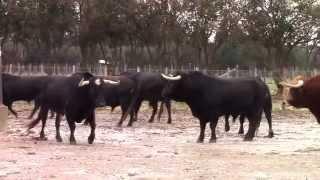Les toros de la Feria d