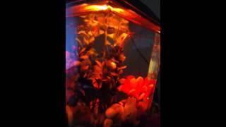 1 Gallon Aqua Culture Aquarium Starter Kit Review
