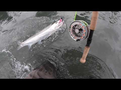 OLYMPIC PENINSULA FLY FISHING WILD STEELHEAD HATCHERY STEELHEAD SPEY CAST FISHING